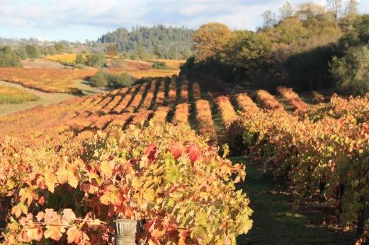 penn-valley-fall-color-2012